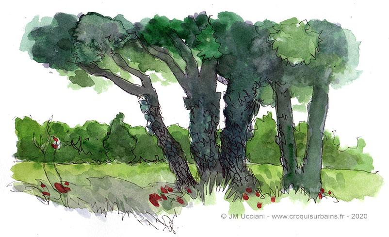 Chênes verts