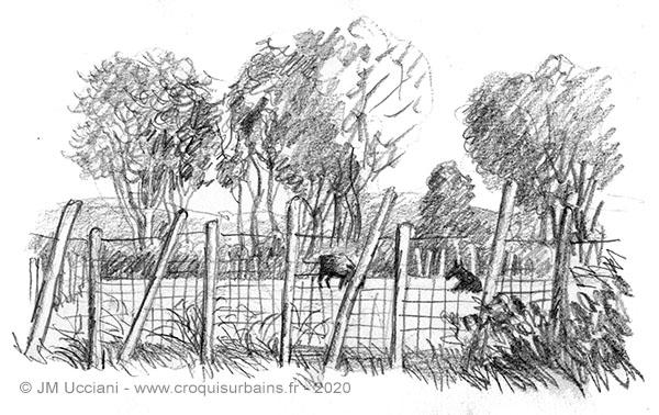 Quelques taureaux dans leur enclos